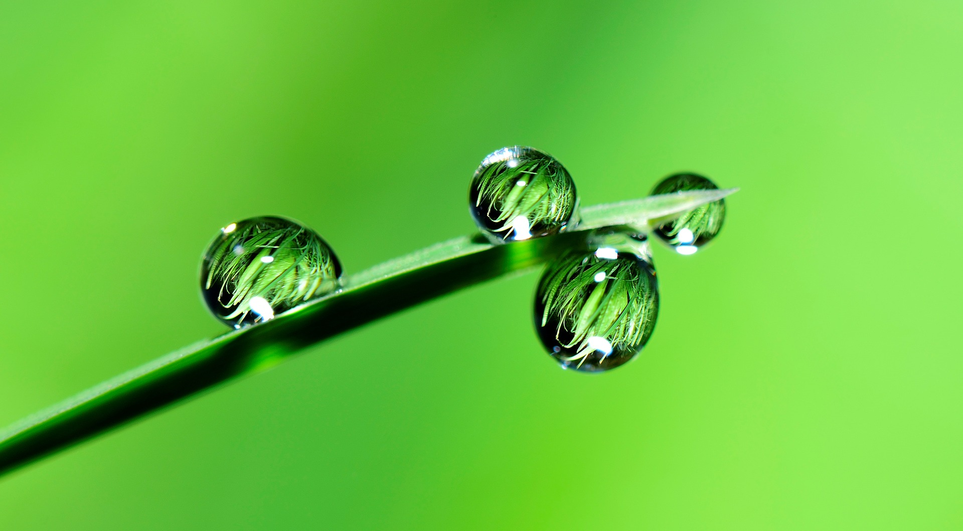 leaf with droplets of water, green